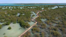 Abu Dhabi's mangroves provide an unexpected key to a better life for humanity