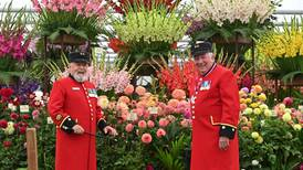 Chelsea Flower Show opens in autumn among the pumpkins for first time