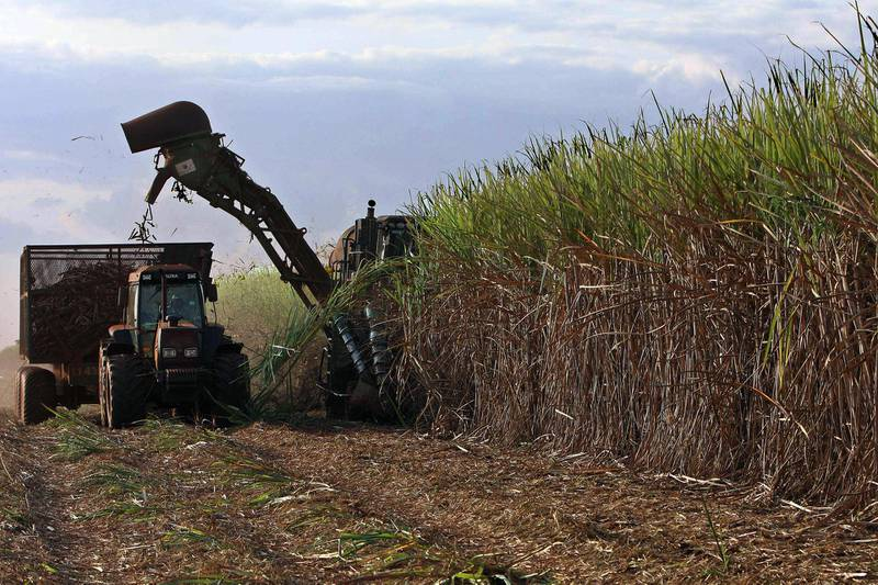"""A mechanical harvester works in a sugar cane plantation in Usina Santa Elisa farm in Sertaozinho, 400 km from Sao Paulo, on June 6, 2008. While other countries are hiking prices at the pump, Brazil is going against the trend: maintaining retail prices by cutting fuel taxes. Ethanol, made from domestically-grown sugar cane, is cheaper than gasoline, and sells for just 1.5 reals (0.95 cents) per liter -- giving the country an added measure of insulation from global oil prices. More than 80 percent of cars are """"flex-fuel"""" models, meaning their engines are built to run on either gasoline or ethanol, or a mix of the two.    AFP PHOTO/Nelson Almeida (Photo by NELSON ALMEIDA / AFP)"""