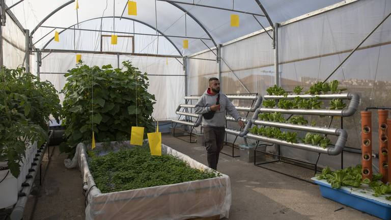 An image that illustrates this article Palestinians innovate with hydroponic gardens