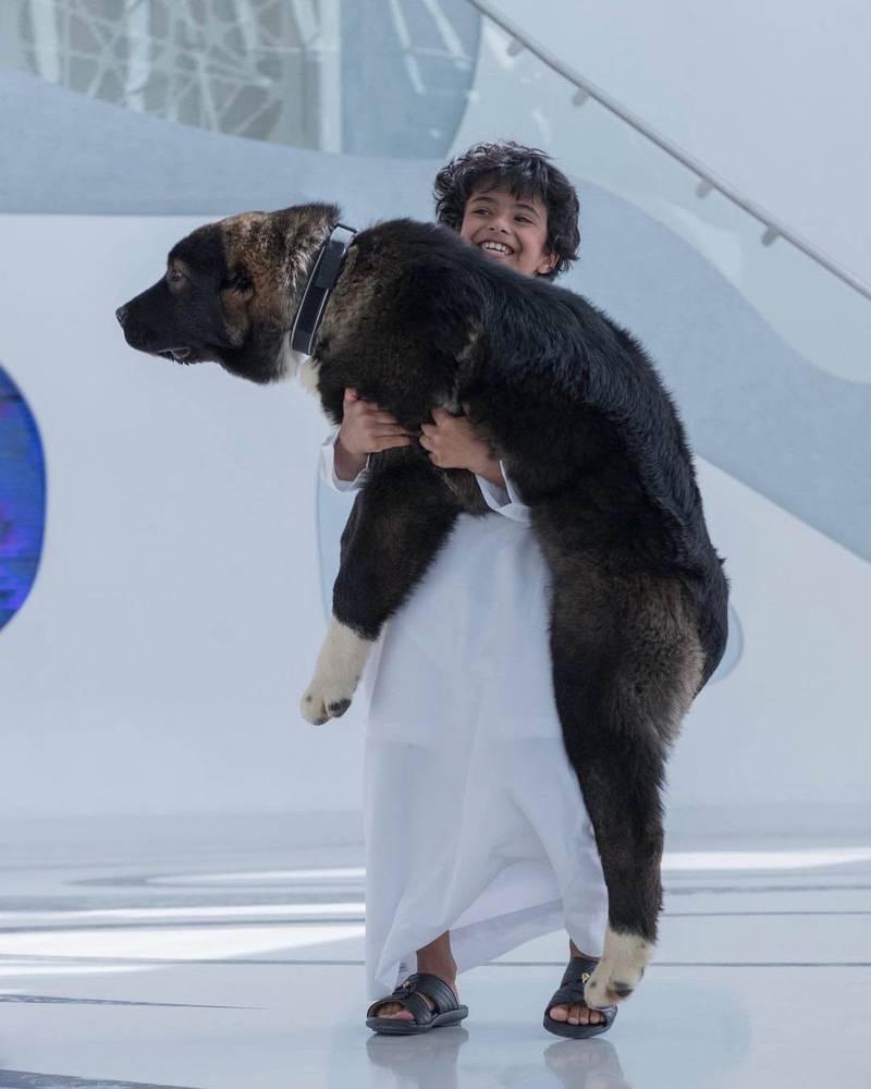 Baloo. Courtesy Sheikh Hamdan bin Mohammed bin Rashid Al Maktoum