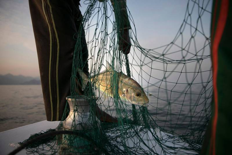 FUJAIRAH, UNITED ARAB EMIRATES, March 3, 2014:    Fishermen sift through their nets, hoping for a catch, as they fish near the Al Rughayalat Port on Monday evening, March 3, 2014.  (Silvia Razgova / The National)  Section: National Reporter: Lindsay Caroll Usage: Undated    ANNIVERSARY EDITION