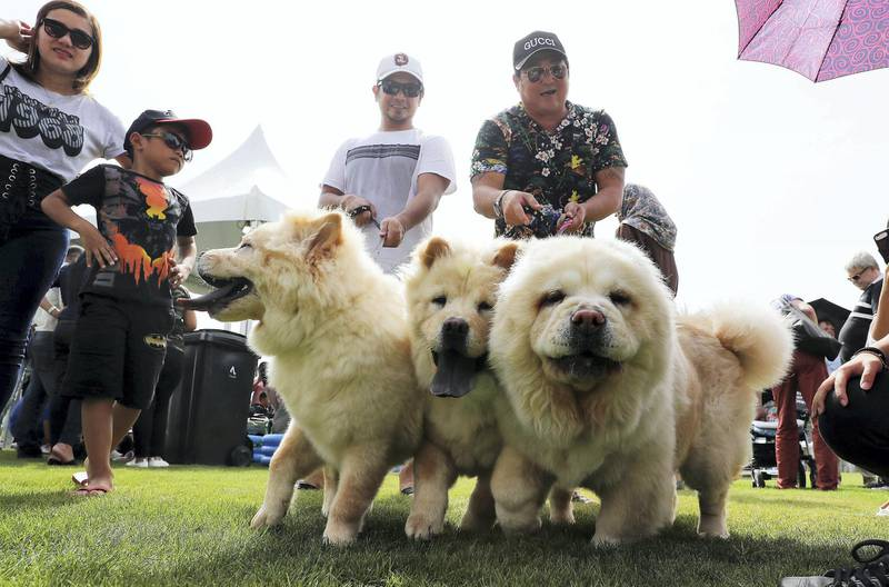 ABU DHABI , UNITED ARAB EMIRATES , APRIL 13   – 2018 :- People with their pets during the pet festival held at DU arena on Yas Island in Abu Dhabi. ( Pawan Singh / The National ) For News