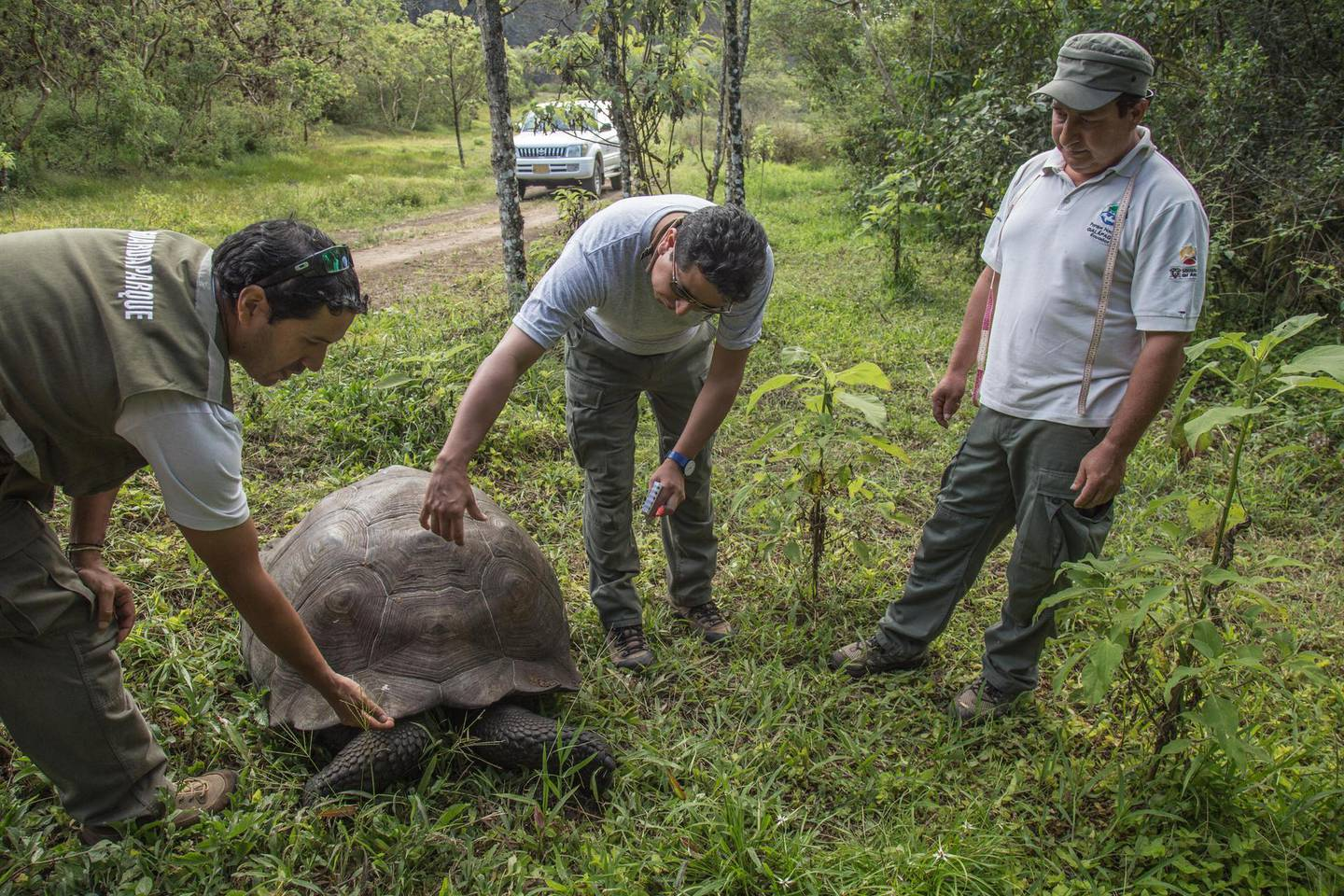 A Santa Cruz Island adult giant tortoise (Chelonoidis Donfaustoi) is examined by the director of the Galapagos National Park, Walter Bustos (C), and two park rangers on Santa Cruz Island, in the remote Ecuadorean archipelago 1000 km off South America's Pacific coast, on January 20, 2018. (Photo by Pablo COZZAGLIO / AFP)