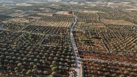 North-west Syria: crops left to rot as Russia-Turkey tensions intensify