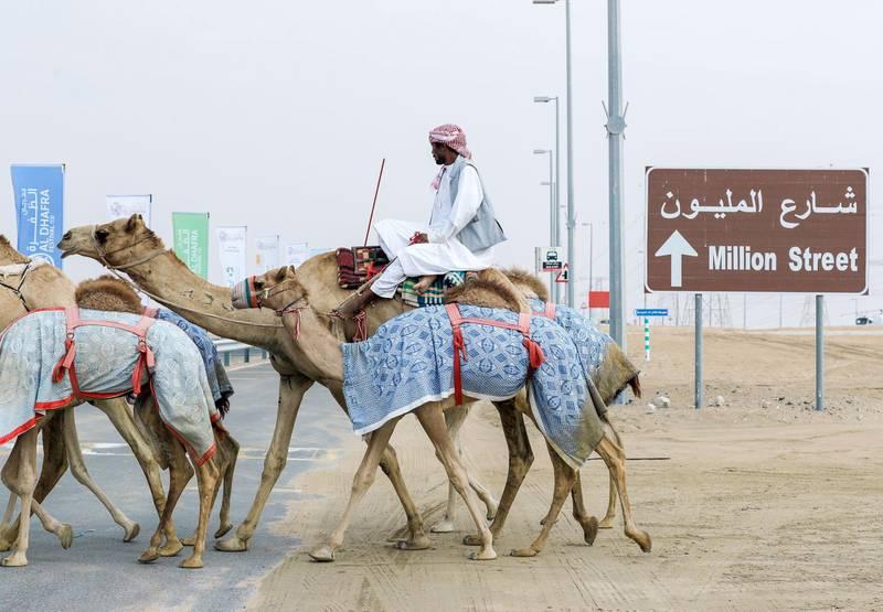 Abu Dhabi, United Arab Emirates, December 10, 2019.    Al Dhafra Festival 2019.Camel handlers cross the famous Million Street at Al Dhafra.Victor Besa/The NationalSection:  NAReporter:  Anna Zacharias