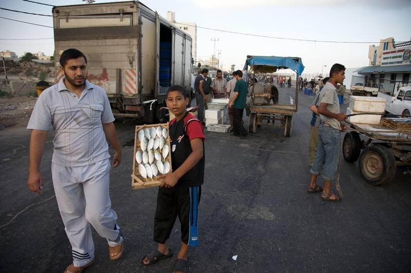 Gaza City. Traders load up fish at the daily fish market.