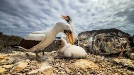 13 stunning images from the Galapagos Conservation Trust's 2021 photo contest