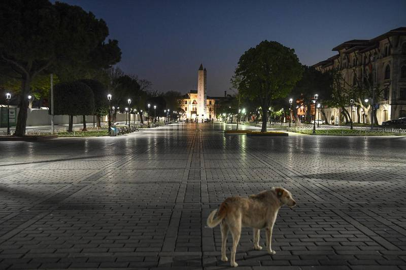 A picture taken on April 24, 2020 shows a dog at deserted Sultanahmet square on the first day of ramandan during a 4-day lockdown as the country adopts measures to curb the spread of the COVID-19 (the novel coronavirus). - Turkish President Recep Tayyip Erdogan announced a four-day lockdown from April 23, 2020 in Istanbul and 30 other major cities as part of measures to stop the spread of the novel coronavirus. (Photo by Ozan KOSE / AFP)