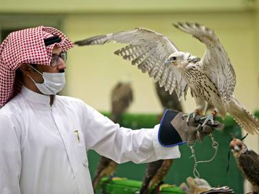 Kuwait's first falcon auction since start of pandemic - in pictures
