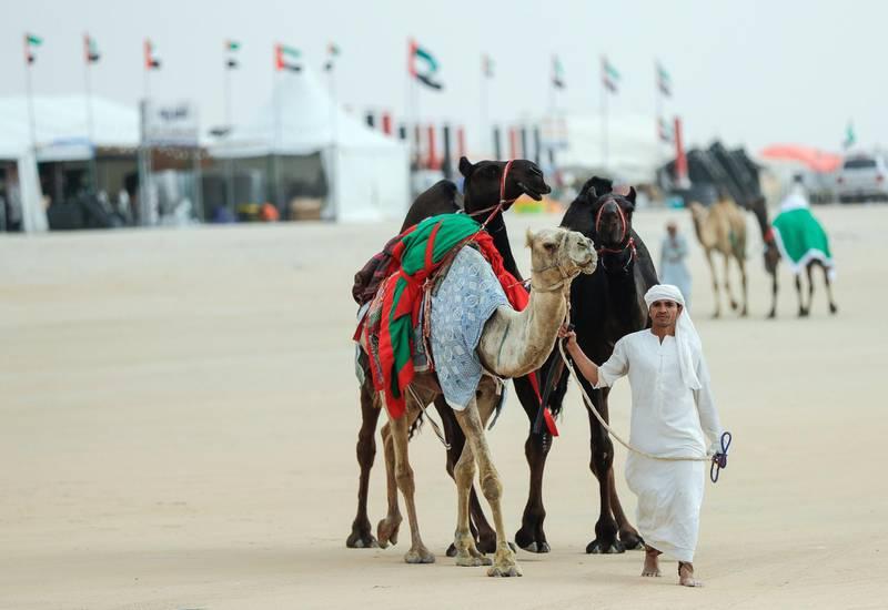 Abu Dhabi, United Arab Emirates, December 10, 2019.    Al Dhafra Festival 2019.A camel handler at the Al Dhafra camp sites.Victor Besa/The NationalSection:  NAReporter:  Anna Zacharias