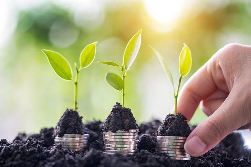 Plant tree growing on business woman hand.Business investment financial growth concept ideas