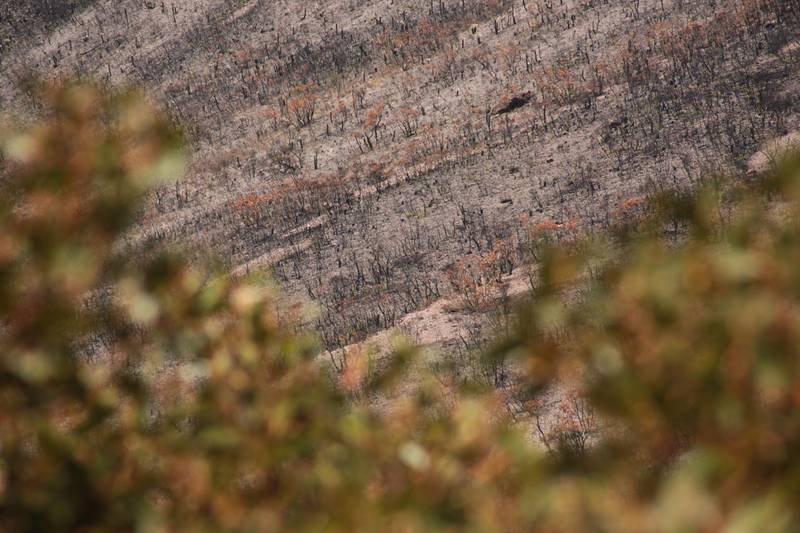 The aftermath of the 2019-2020 bushfires in the Stirling Ranges National Park, Western Australia. Louise Burke/The National