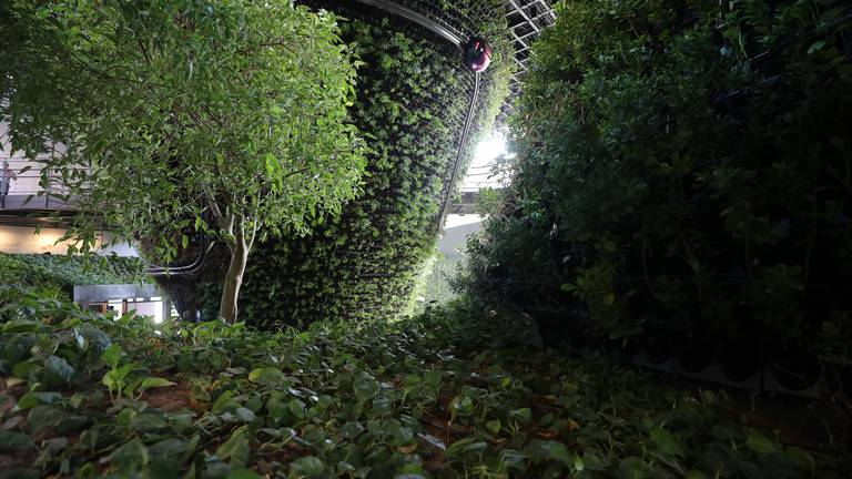 An image that illustrates this article Singapore pavilion uses trees and mist to lower temperature by 10ºC