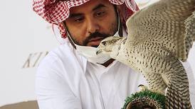 International Falcon Breeders Auction has been launched in the Saudi Arabian desert